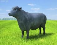3D model of Angus Bull