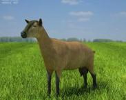 3D model of Alpine Goat