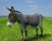 3D model of Donkey