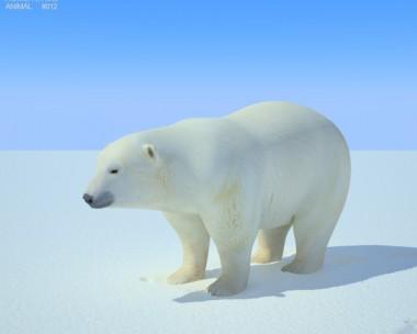 3D model of Polar Bear