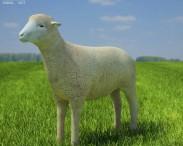 3D model of Sheep