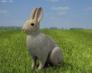 3D model of Common Rabbit
