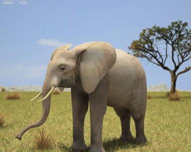 3D model of African Elephant