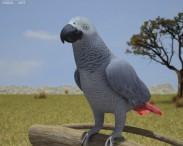 3D model of African Grey Parrot