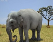 3D model of Asian Elephant