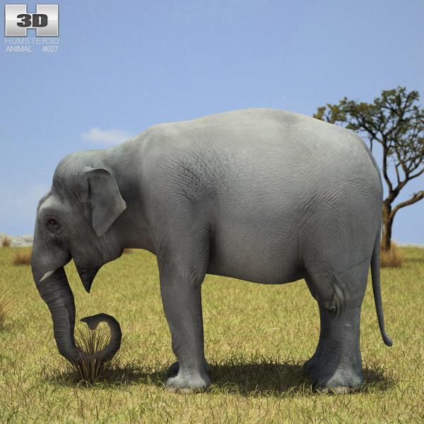 Asian Elephant 3d model