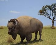 3D model of American Bison (Buffalo)