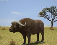 3D model of African Buffalo