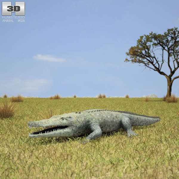 Common Crocodile (Crocodylus Niloticus) 3d model