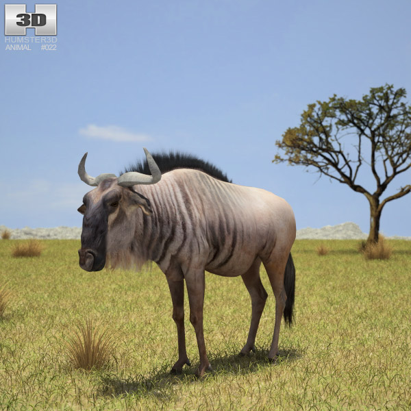 Wildebeest (Connochaetes) 3d model