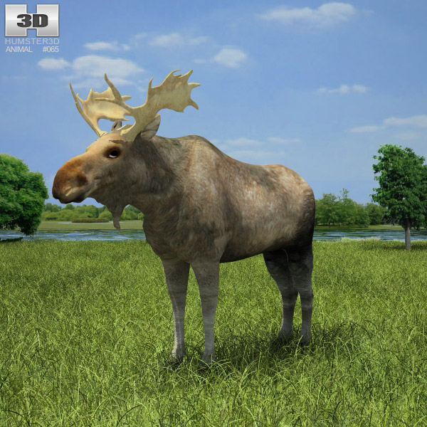 Moose (Alces Alces) 3d model