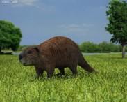 3D model of Beaver