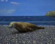 3D model of Crabeater Seal