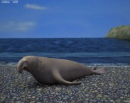 3D model of Northern Elephant Seal