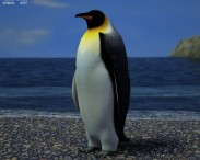 3D model of Emperor Penguin