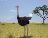 3D model of Ostrich