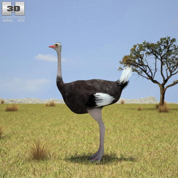 Ostrich 3d model