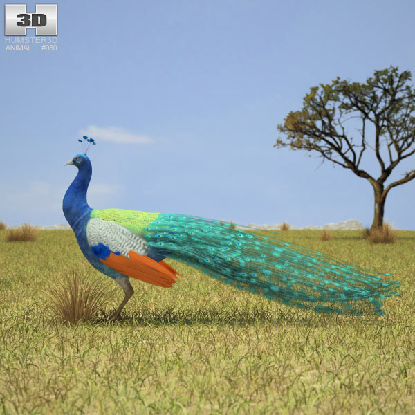 Indian Peafowl 3d model