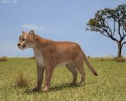3D model of Cougar