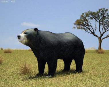 3D model of Spectacled Bear