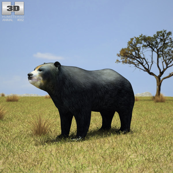 Spectacled Bear (Tremarctos Ornatus) 3d model