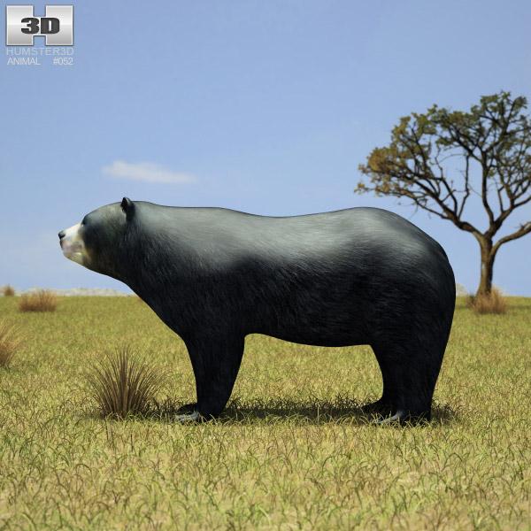 Spectacled Bear 3d model