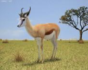3D model of Springbok