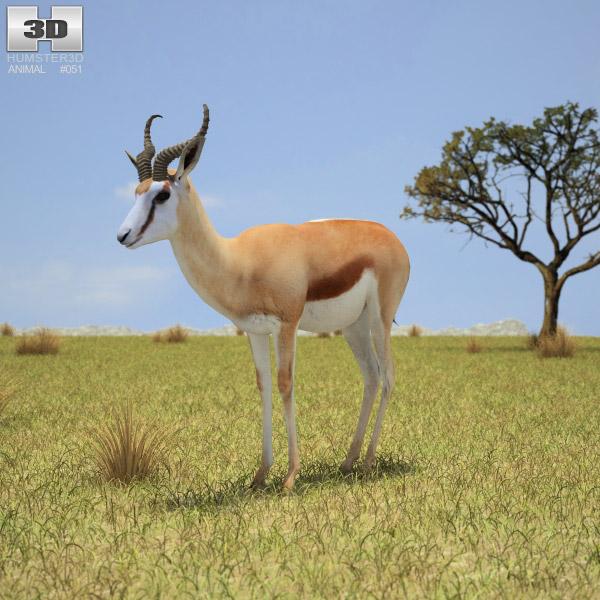 Springbok (Antidorcas Marsupialis) 3d model