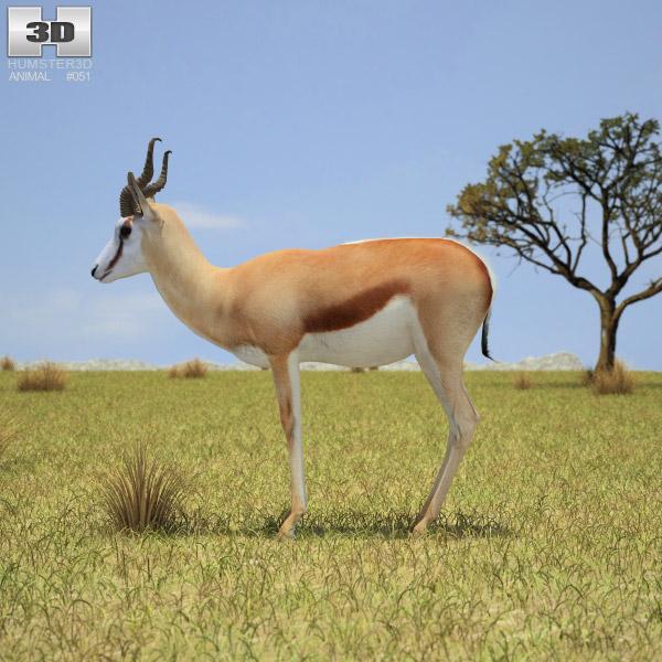 Springbok 3d model