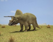 3D model of Triceratops