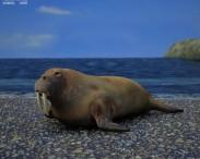 3D model of Walrus