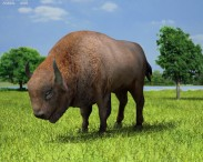 3D model of European Bison
