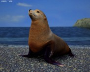 3D model of Brown Fur Seal
