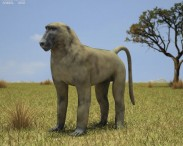 3D model of Chacma Baboon