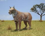 3D model of Bobcat