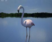 3D model of Flamingo
