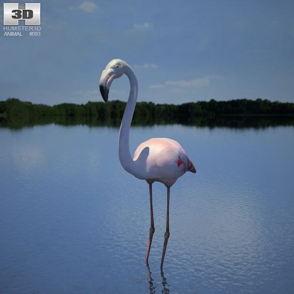 Flamingo (Phoenicopterus) 3d model