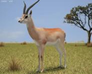 3D model of Grant's Gazelle