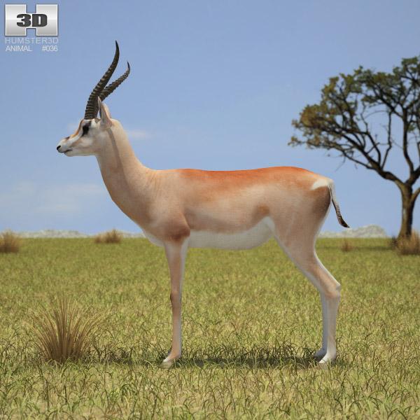 Grant's Gazelle 3d model