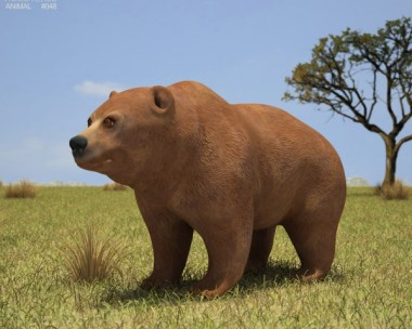 3D model of Grizzly Bear