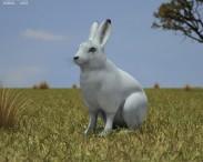 3D model of Arctic Hare