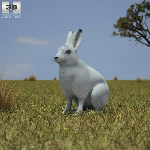 Arctic Hare 3d model