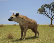 3D model of Spotted Hyena