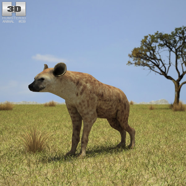 Spotted Hyena (Crocuta Crocuta) 3d model