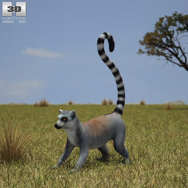 Ring-Tailed Lemur (Lemur Catta) 3d model