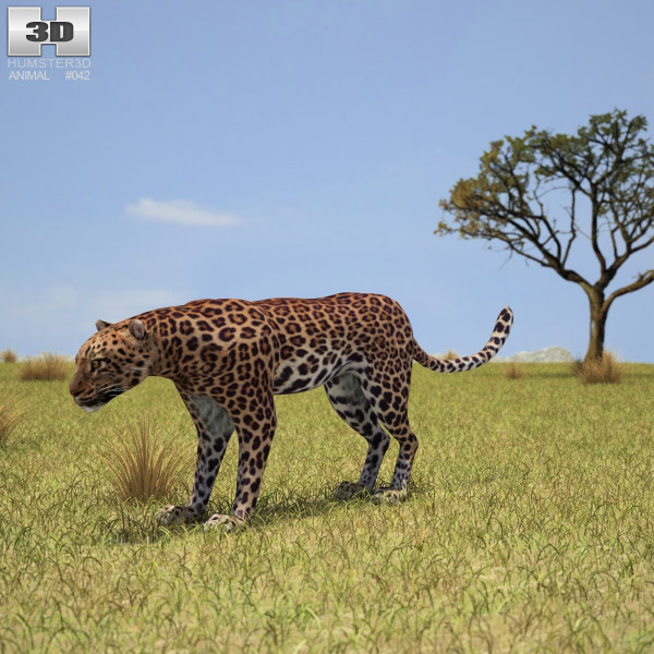 Leopard (Panthera Pardus) 3d model