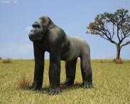 3D model of Gorilla