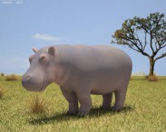 3D model of Hippopotamus