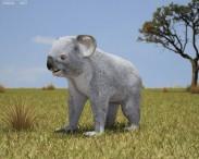 3D model of Koala