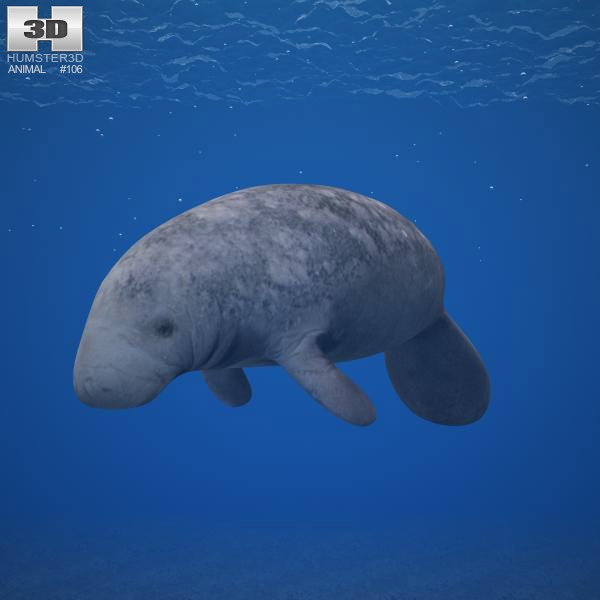 West Indian Manatee 3d model